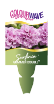 Surfinia Summer Double™